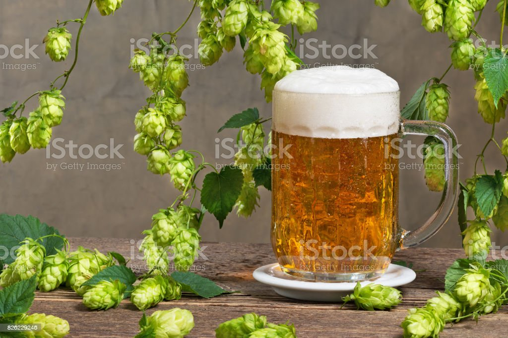 Still life with hop cones and glass of beer stock photo
