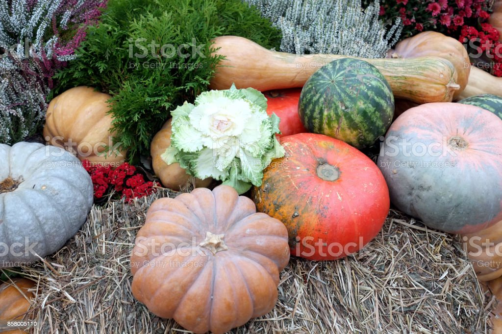 Still life with lot of flowers and autumn vegetables on hay stock photo