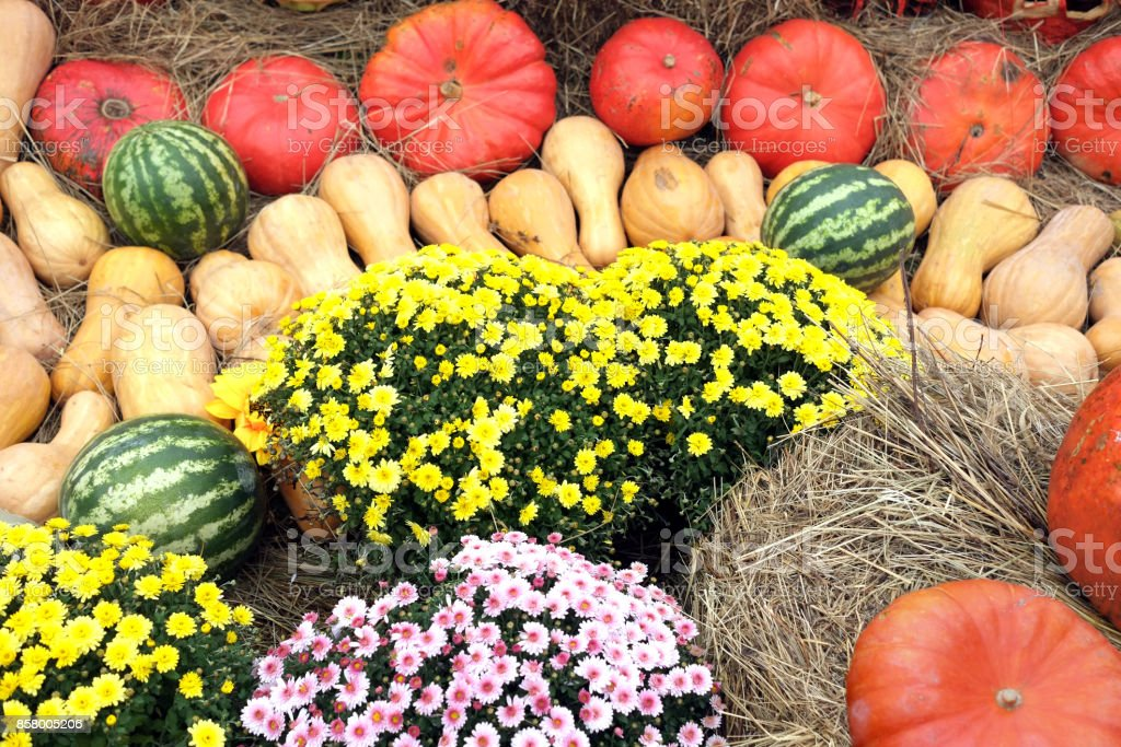 Still life with lot of flowers and autumn vegetables stock photo