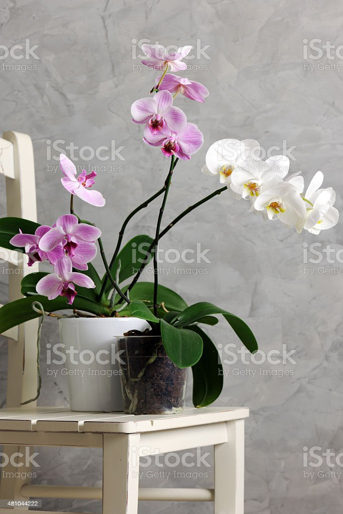 still life with orchids stock photo