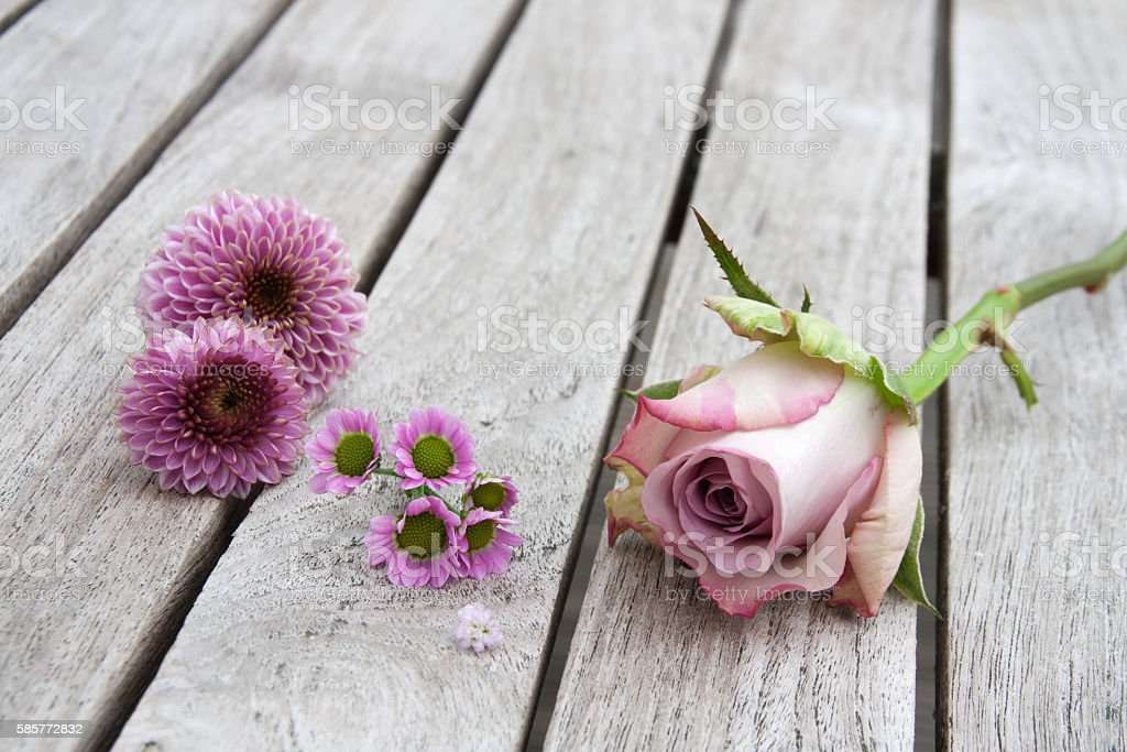 Still Life with pastel roses and daisies stock photo