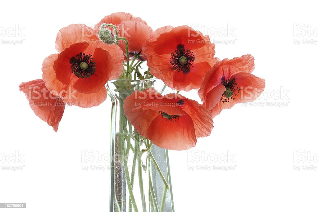 Still life with poppies royalty-free stock photo