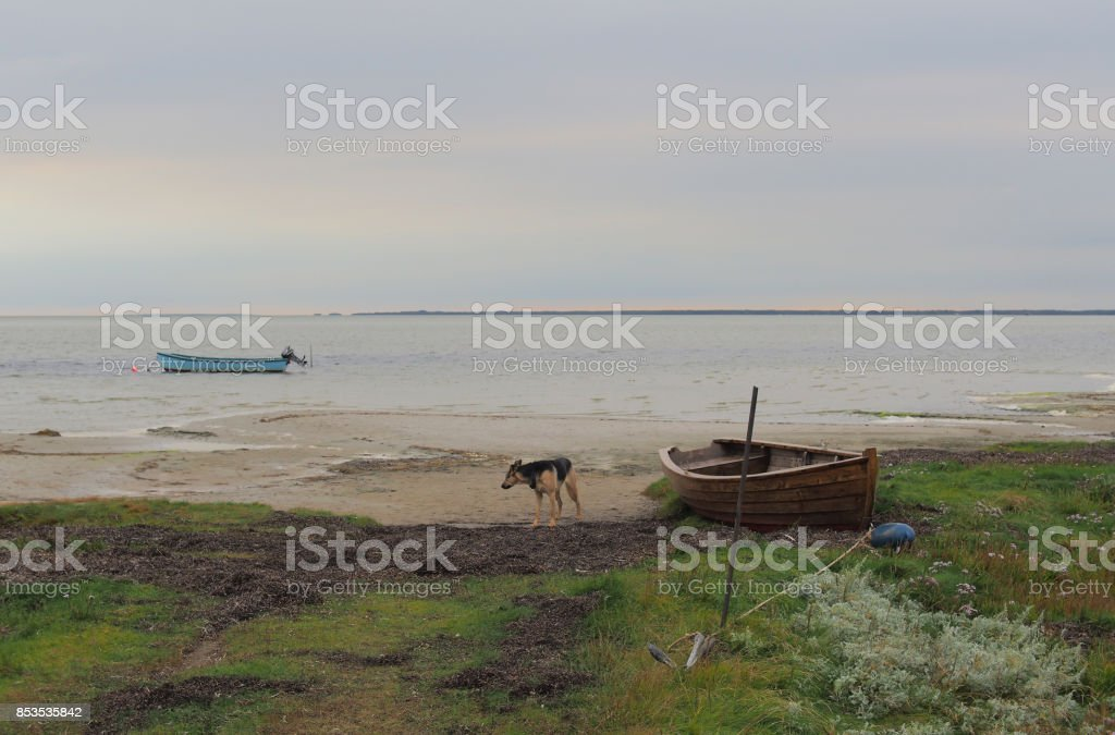 Still life with rowing boats and a dog stock photo