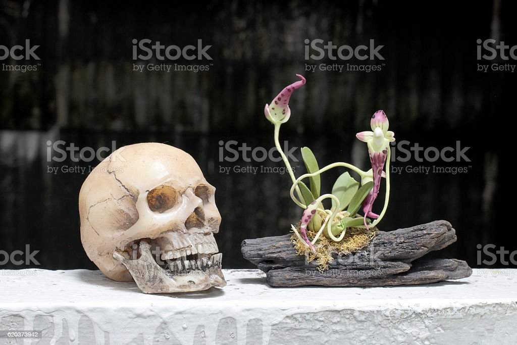 still life with skull and orchid on wood foto de stock royalty-free