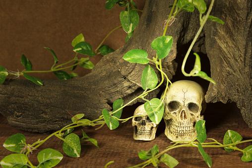 istock still life with two skulls 498949914