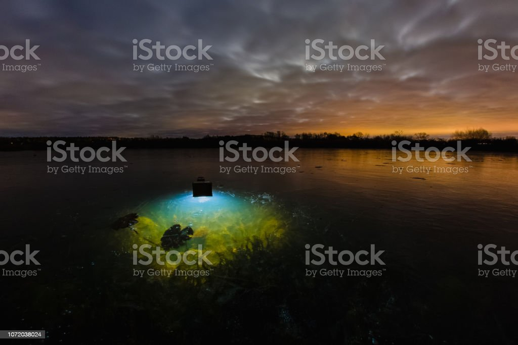 Still life with underwater plant under surface of frozen lake stock photo