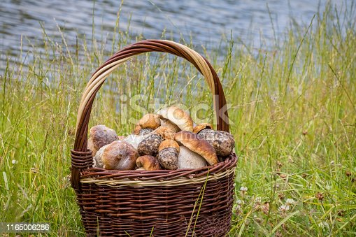 Still life with wicker basket of edible mushrooms on grass with pond in background - Czech Republic, Europe