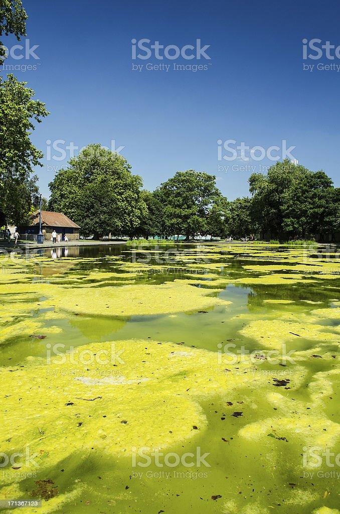still mossy water landscape stock photo