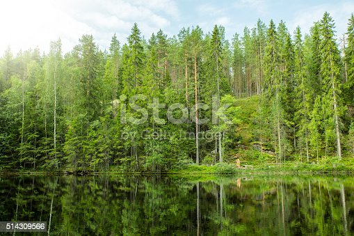 Lush Green Forest and Reflection in Still Lake