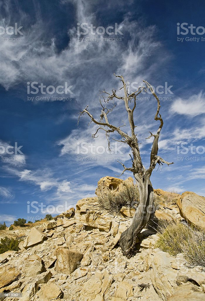 Still Standing in Rio Puerco royalty-free stock photo