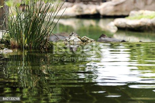 Still water in nature, Valencia, Spain.