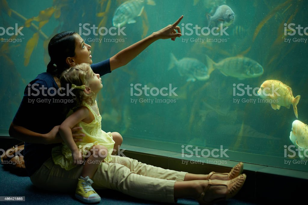 Stimulating her mind with the sea-life​​​ foto
