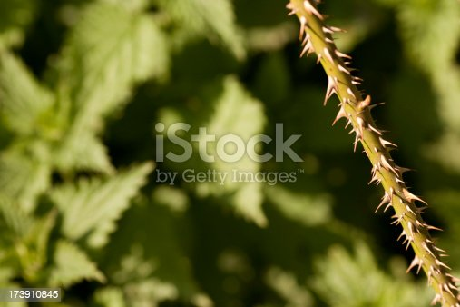 Thorn covered stem in front of defocussed nettle bush in a garden