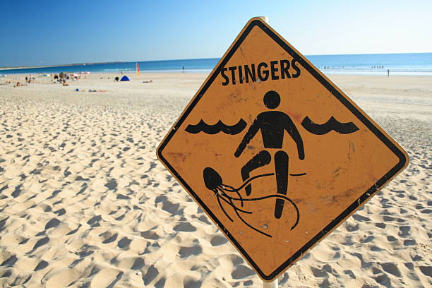 """Stingers """"Jellyfish warning sign, cable beach, western Australia"""" stinging stock pictures, royalty-free photos & images"""