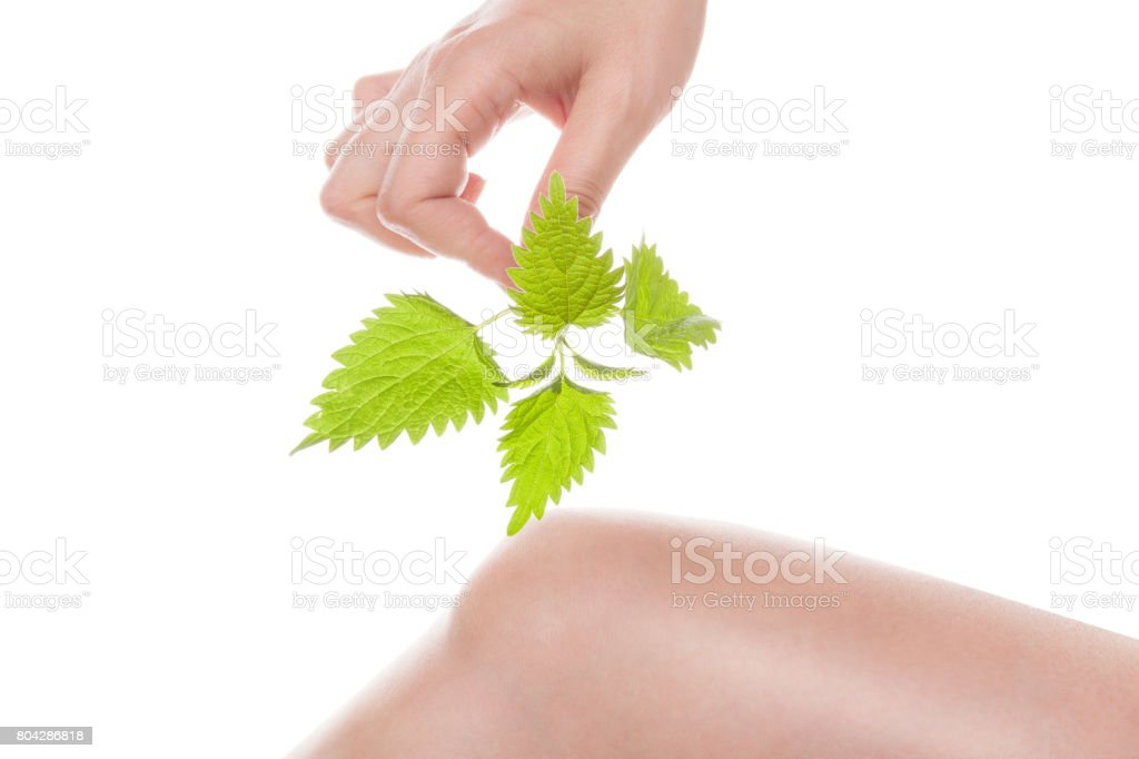 Stinging nettle arthritis medicine. stock photo