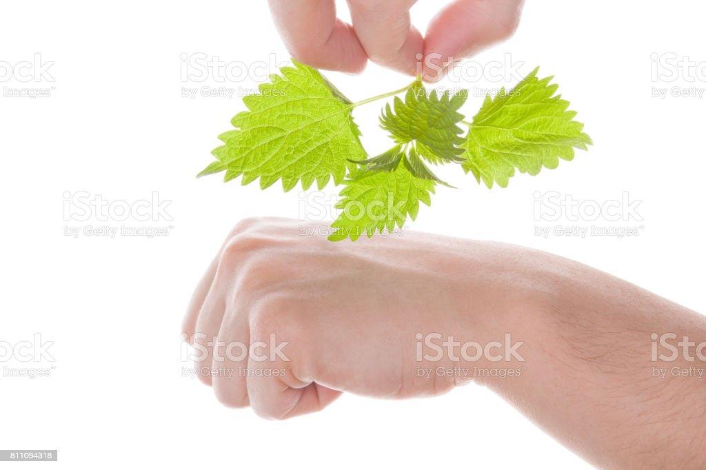 Stinging nettle arthritis medicine. stock photo