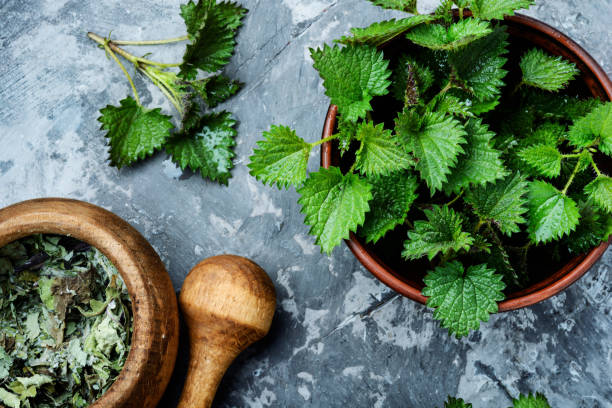 Stinging nettles,urtica medical herb Fresh stinging nettle leaves.Bowls with fresh nettle leaves stinging nettle stock pictures, royalty-free photos & images