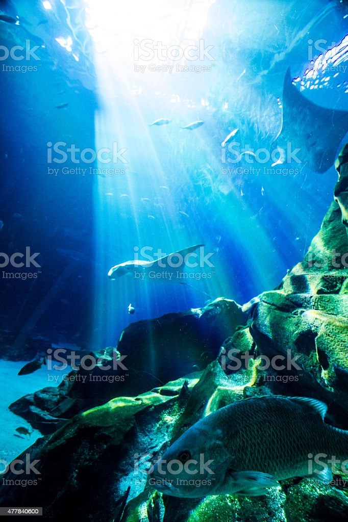 Stingrays and fish in an aquarium stock photo