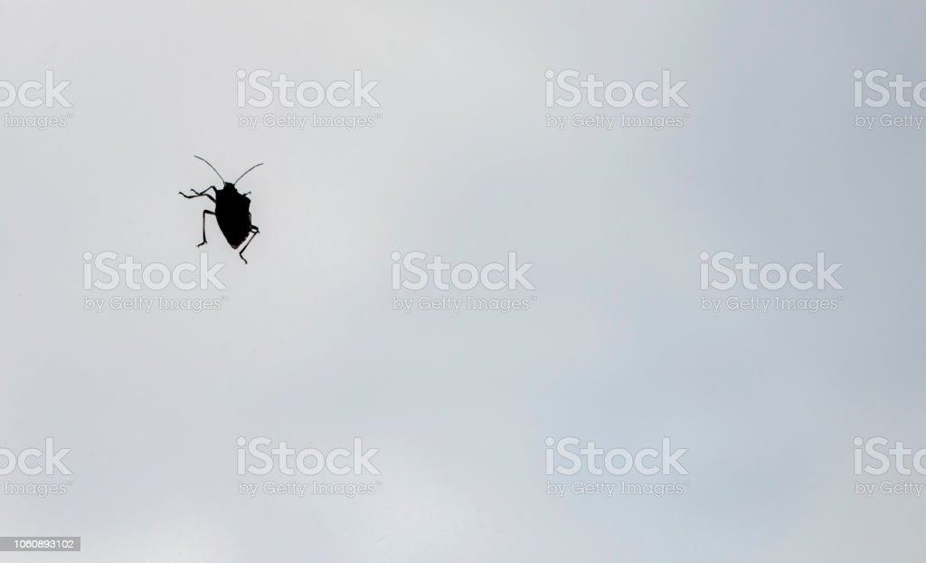 Stink bug stock photo