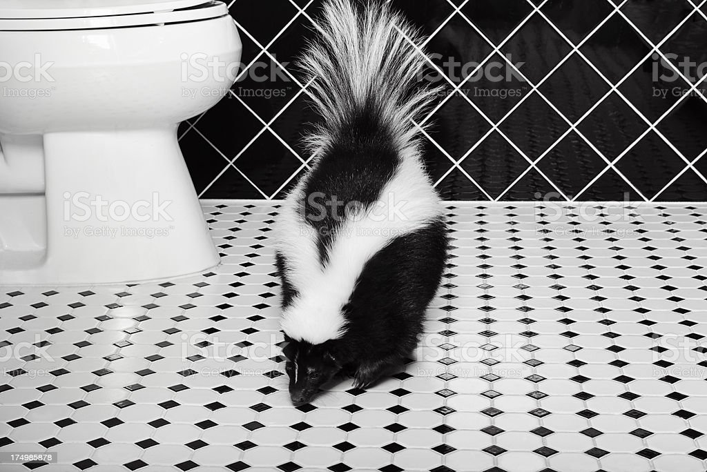 Stinker Station - Complete With Skunk stock photo