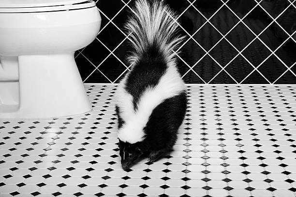 stinker station - complete with skunk - skunk stock photos and pictures