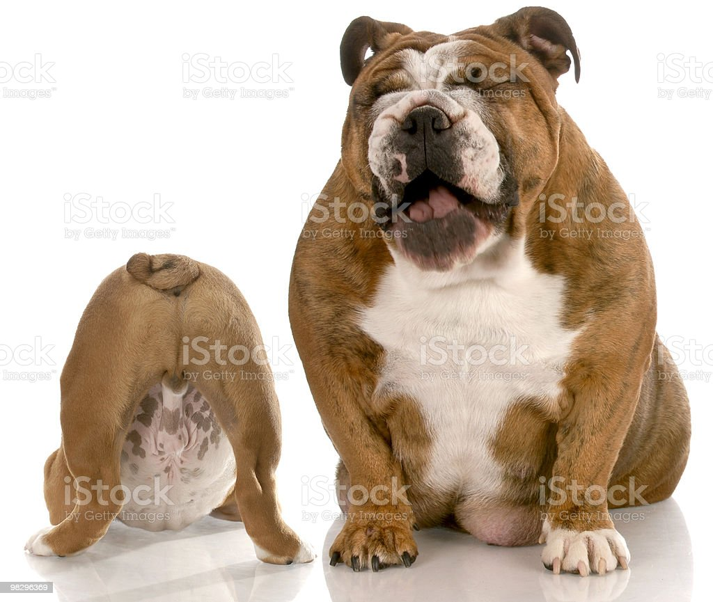 stinky dog royalty-free stock photo