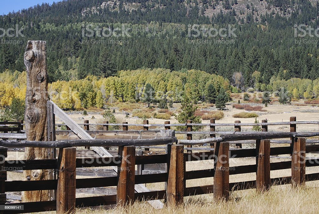 Corrals y otoño Folliage Stock foto de stock libre de derechos