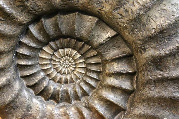 stock full frame image of ammonite fossil spiral, close-up - 重複螺旋型 個照片及圖片檔