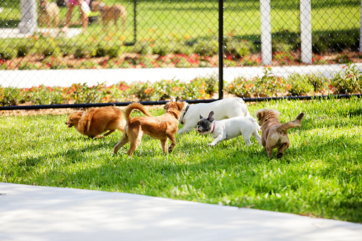 Stock image of dogs in the park