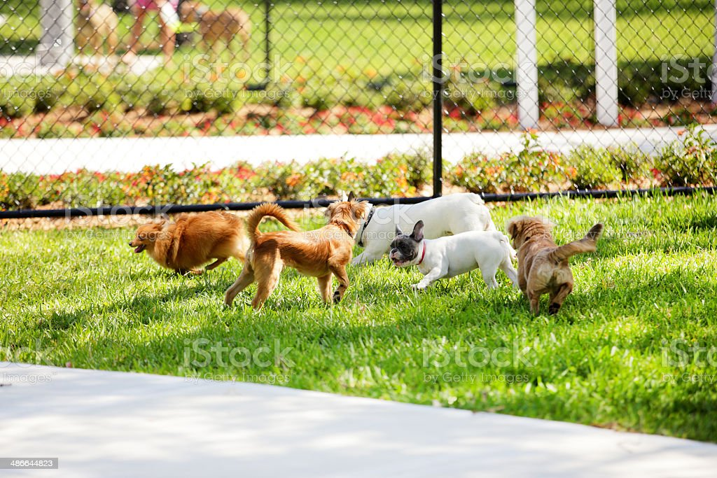 Stock image of dogs in the park stock photo