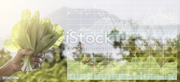 istock Stock market index information data on agriculture business.Farmer's hand hold organic green fresh lettuce vegetable for food in the organic farm. 920421256