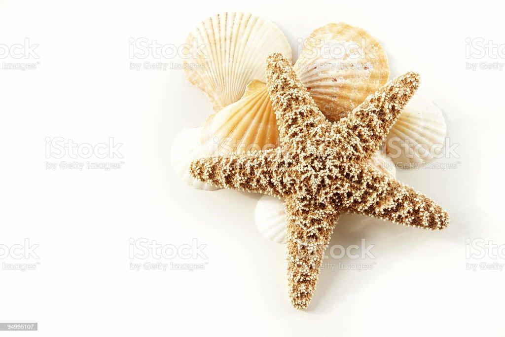 Stock Photo Starfish still life royalty-free stock photo