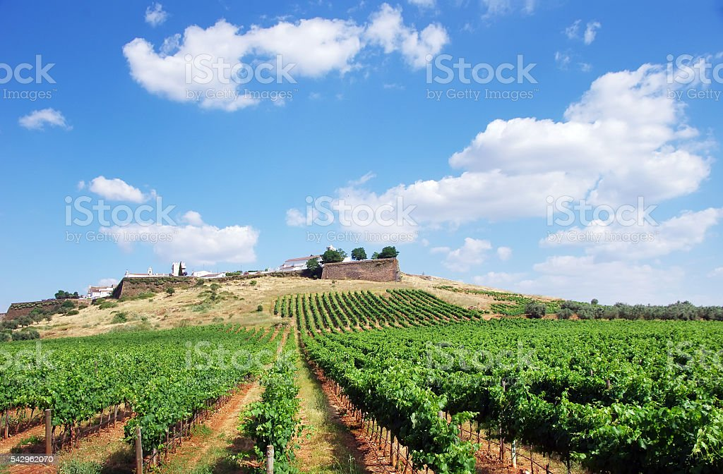 Stock Photo - Vineyard at Portugal,Estremoz, Alentejo region - foto de acervo