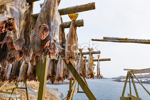 Wooden racks (Hjell) with prepared gutted Cod fish hanging to dry in the cold winter air on the Lofoten islands in Norway. Because of the stable cold winter  conditions, the stockfish produced in the Lofoten is regarded as the best.