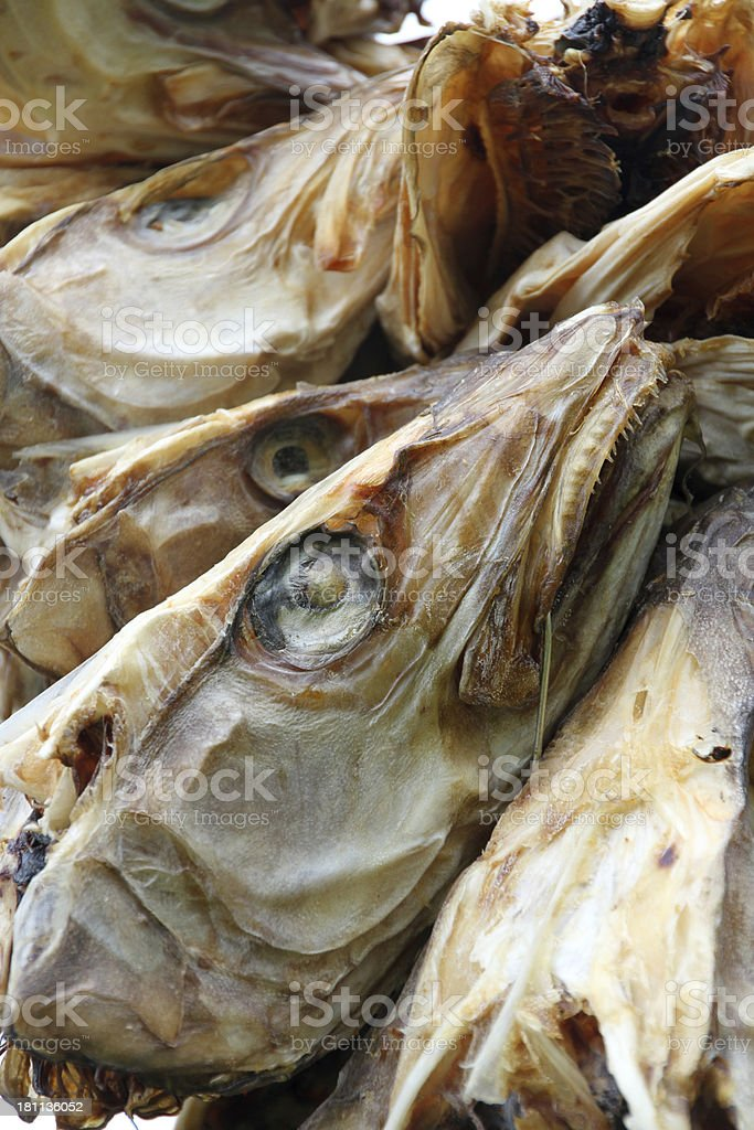 stockfish heads drying royalty-free stock photo