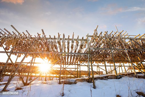 Stockfish in Norway - Lofoten in a sunny day