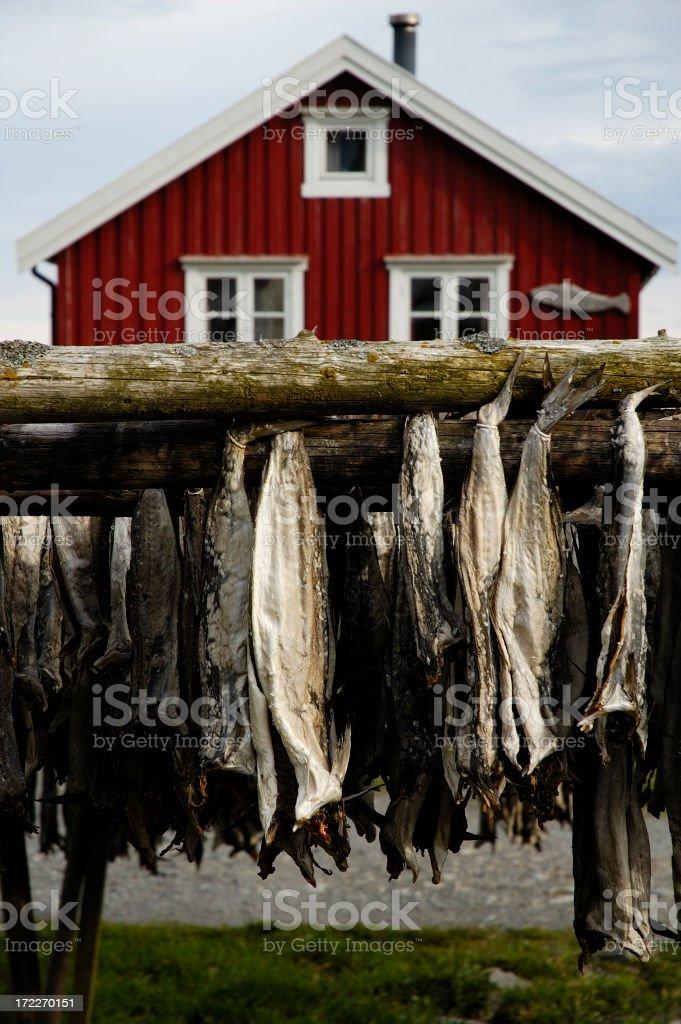 Stockfish royalty-free stock photo