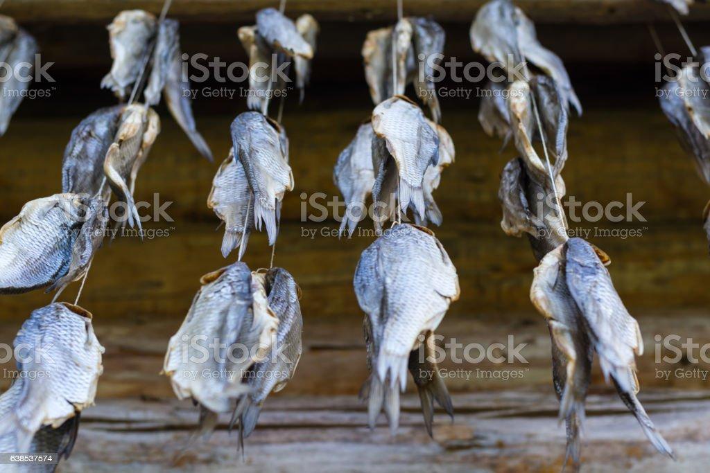 Stockfish stock photo