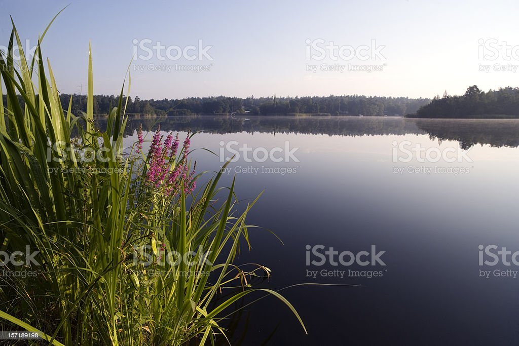 Stockholm archipelago in summer royalty-free stock photo