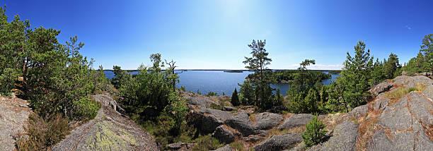 stockholm archipelago - pine forest sweden bildbanksfoton och bilder