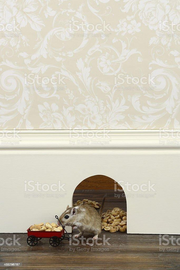 Stocking Up on Peanuts stock photo