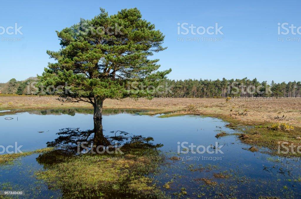 Stockley Tree Reflection stock photo