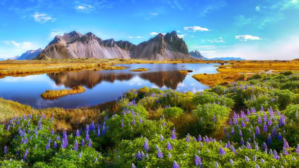 stokksnes cape in iceland - islandia zdjęcia i obrazy z banku zdjęć