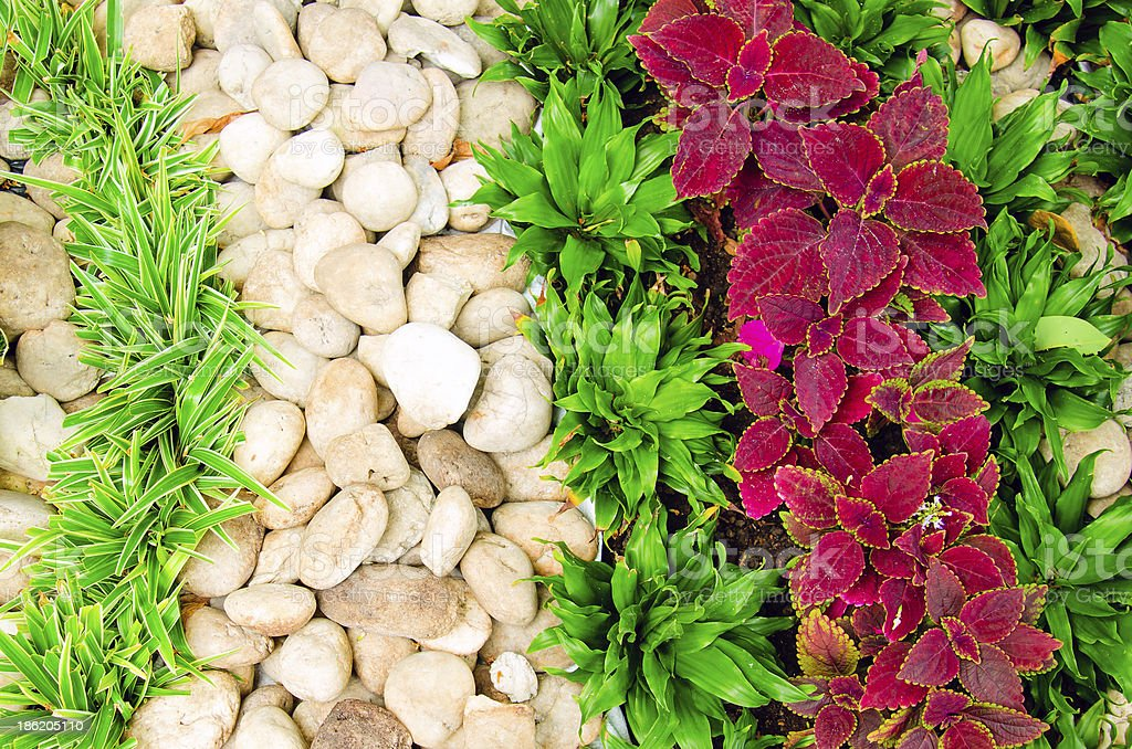 stone and grass in the garden royalty-free stock photo