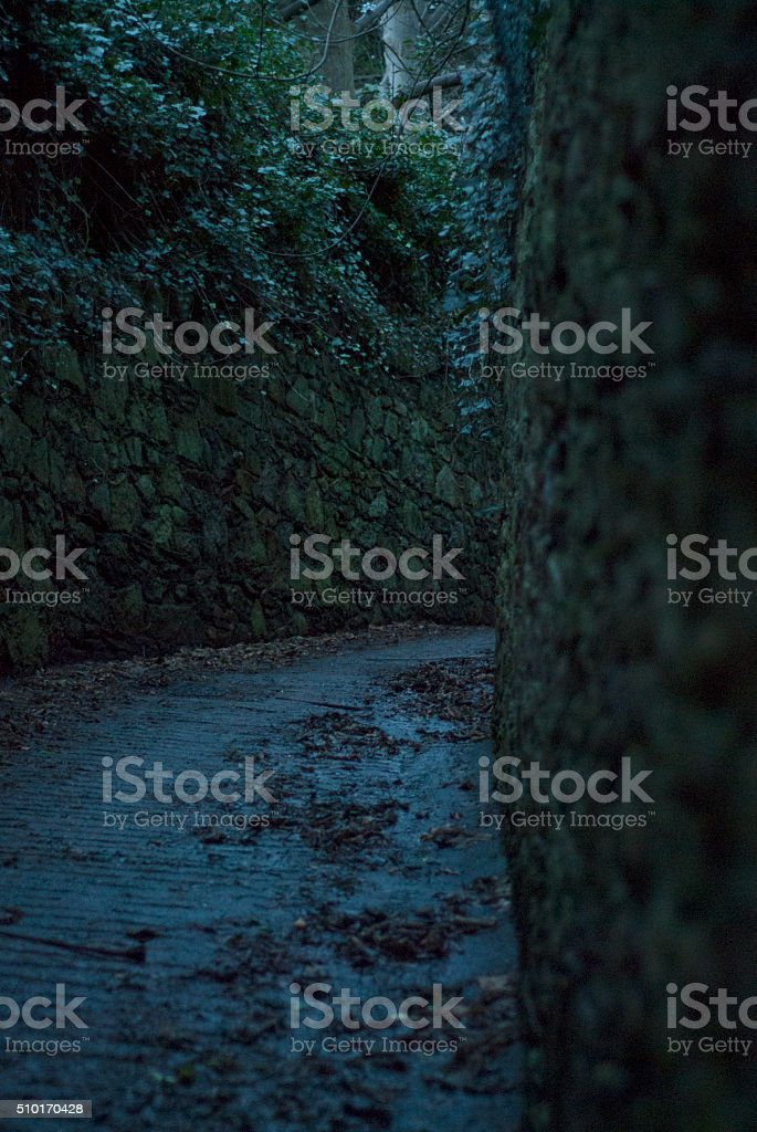 Stone and ivy path stock photo