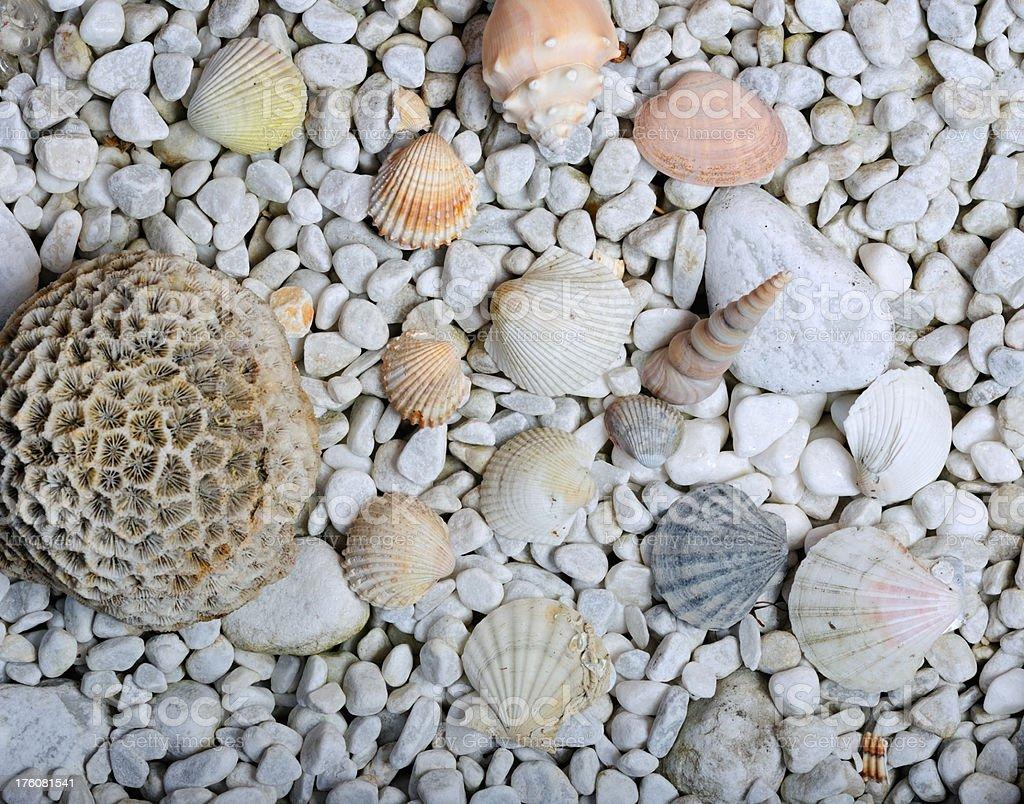 Stone und Sea Shell Hintergrund (XXXL – Foto