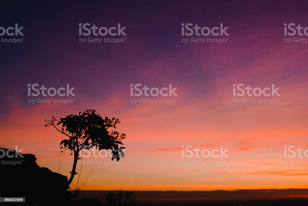 Sihouettes pedra e árvore ao nascer do sol no Brasil - foto de acervo