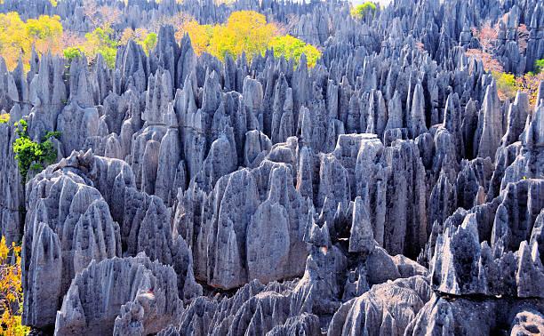 스톤 칼날은 at 베마라하, 마다가스카 - 카르스트 지형 뉴스 사진 이미지