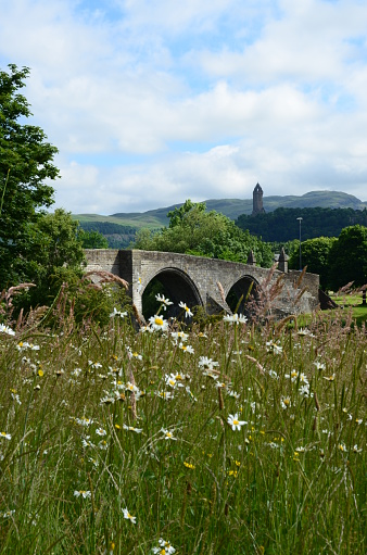 Wildflowers grow on the riverbank beside the old historic stone bridge at Stirling
