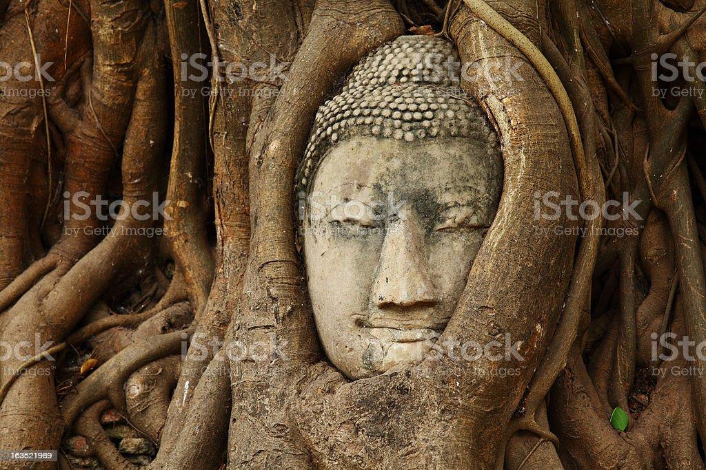 Stone Buddha head at Wat Phra Mahathat, Ayuthaya, Thailand stock photo